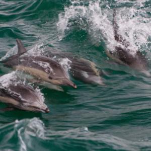 Dolphin sight by GoTripAir
