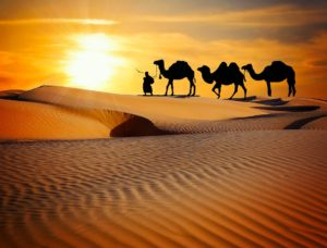 camel riding in dubai desert safari by Gotripair